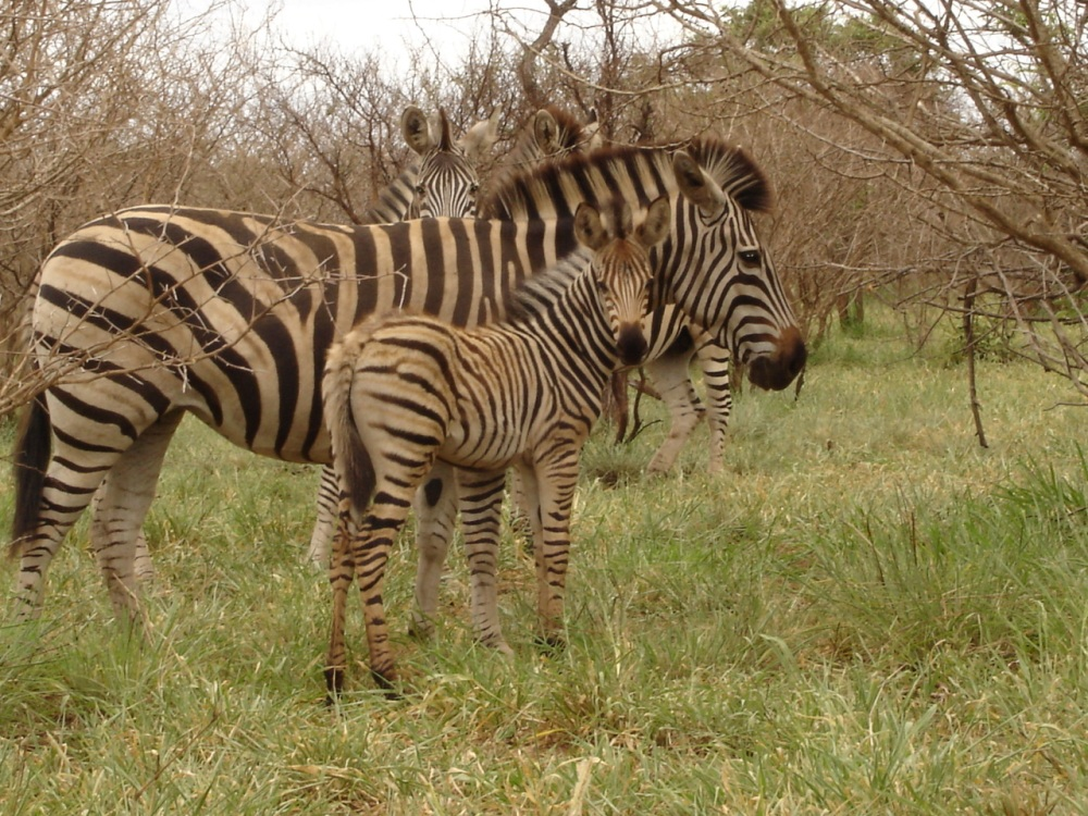 South Africa 127(1)